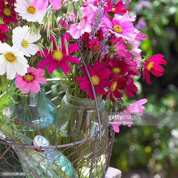 Bouquet of colorful Cosmos flowers in vase