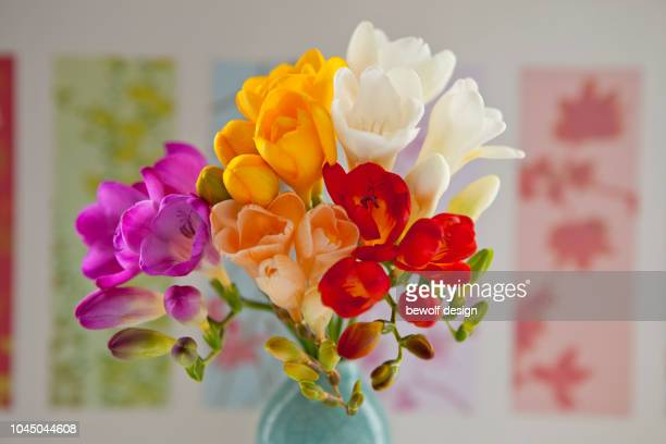 Bouquet of colourful freesias