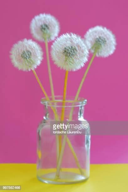 Bouquet of dandelions in vase