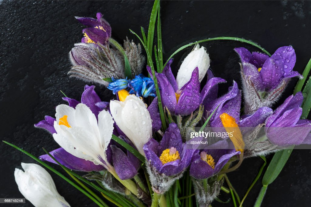 Bouquet of first spring flowers snowdrops hyacinth prairie crocus on bouquet of first spring flowers snowdrops hyacinth prairie crocus on wet slate mightylinksfo
