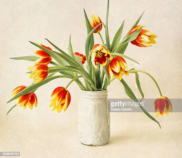 Bouquet of fresh tulips in white vase