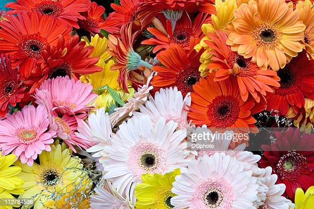bouquet of gerbera daisies - ogphoto stock pictures, royalty-free photos & images