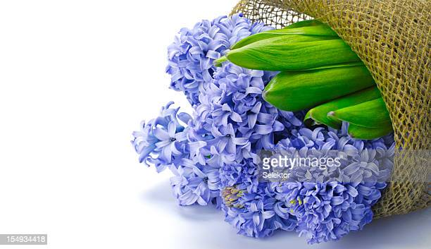 Bouquet of hyacinths