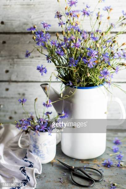 bouquet just cut cornflowers metal teapot