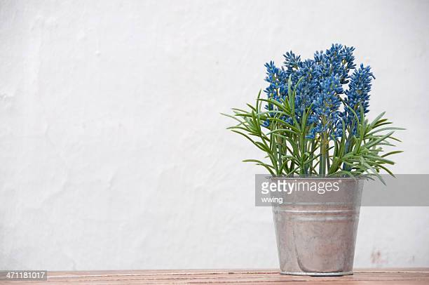 Bouquet  of lavender in a pail on white background
