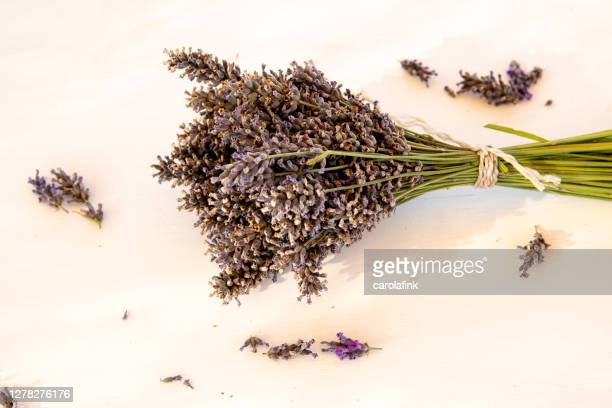 bouquet of lavender - carolafink stock pictures, royalty-free photos & images