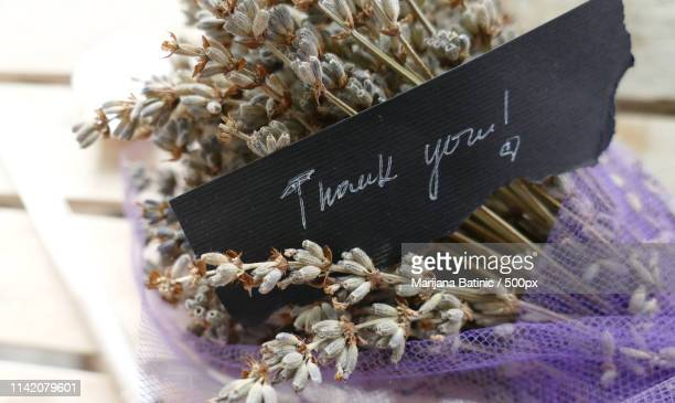 bouquet of lavender with thank you note - marijana stock pictures, royalty-free photos & images