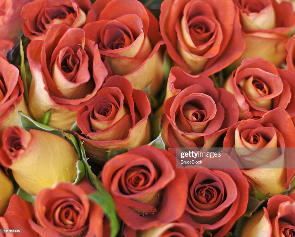 Bouquet Of Leonidas Roses High-Res Stock Photo - Getty Images