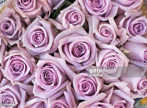 Matrimonio Bed Of Rose : Bed of roses stock photos and pictures getty images
