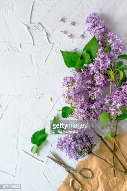 Bouquet of lilacs  flower on white background