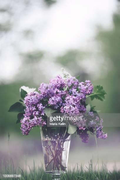 bouquet of lilacs in glass vase - ライラック ストックフォトと画像