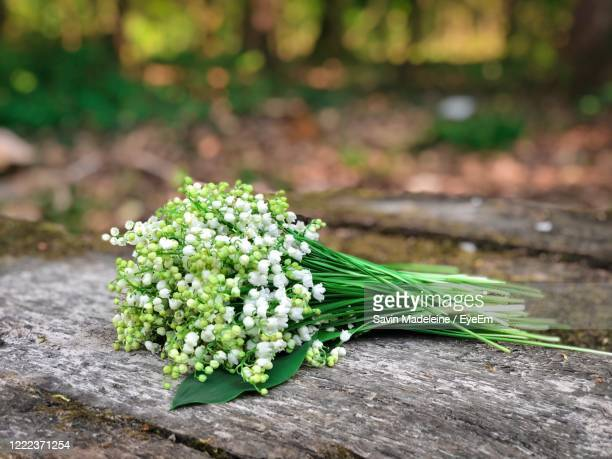 bouquet of lilies of the valley flowers on rustic wooden table - mughetto foto e immagini stock