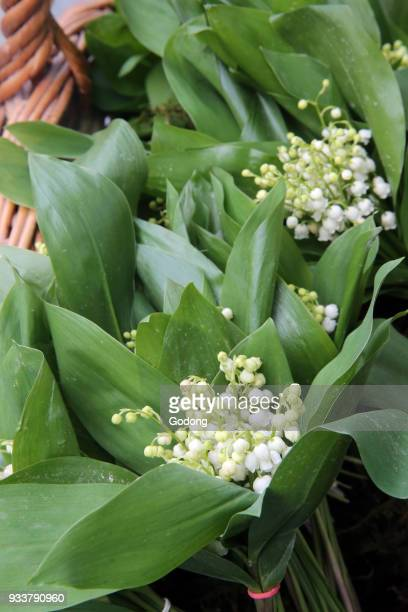 Bouquet of lilies of the valley France