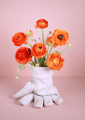 Bouquet of orange ranunculus in white leather work glove. - gettyimageskorea