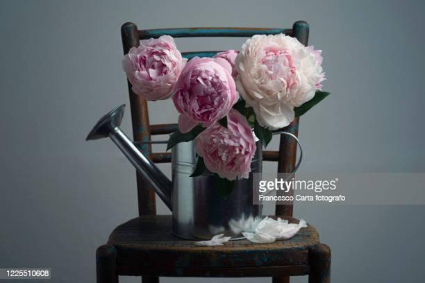 bouquet of peonies in aluminium watering can - still life foto e immagini stock