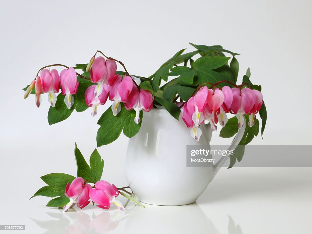 Bouquet of pink bleeding-heart flowers in vase. Floral still life. : Stockfoto