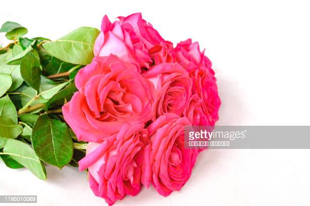 bouquet of pink color beautiful roses isolated on white background. selective focus. copy space. - mazzo di rose foto e immagini stock