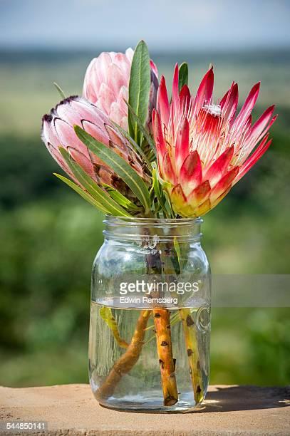 Bouquet of protea