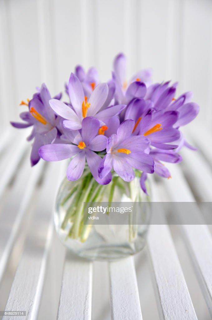 bouquet of purple crocus in vase : ストックフォト