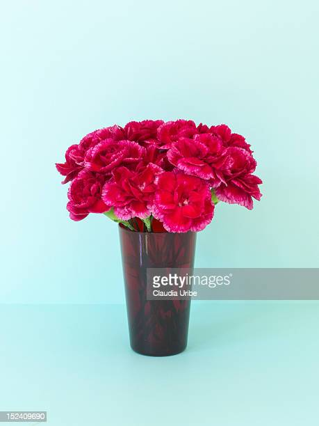 Bouquet of red carnations on aqua background