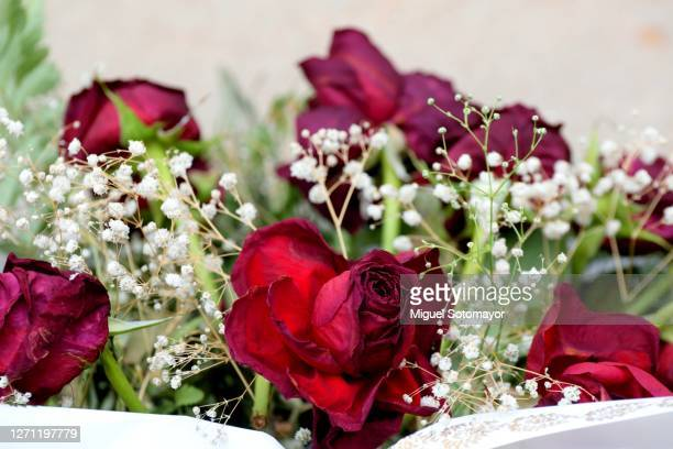 bouquet of red roses on the grave - funeral stock pictures, royalty-free photos & images