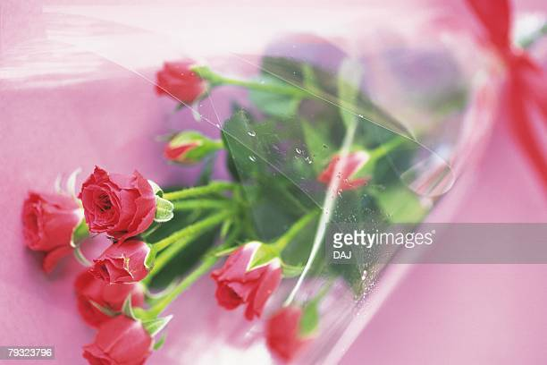 Bouquet of roses, high angle view, pink background, differential focus