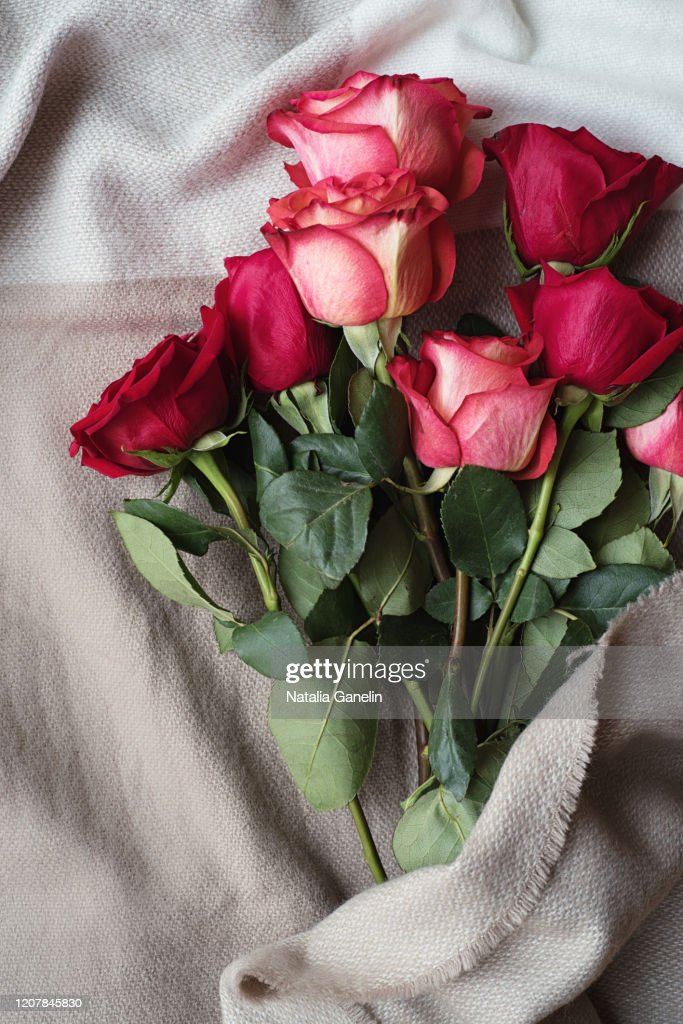 Bouquet of roses wrapped in warm blanket : Stockfoto