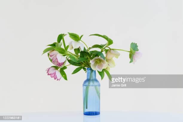 bouquet of spring flowers in bottle - montclair stockfoto's en -beelden