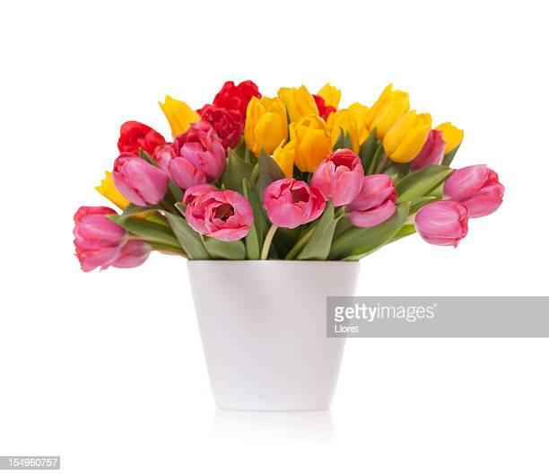 Strauß Tulpen isoliert auf weißem Hintergrund