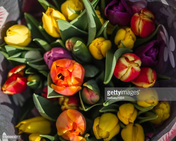 a bouquet of tulips - bunch of flowers stock pictures, royalty-free photos & images