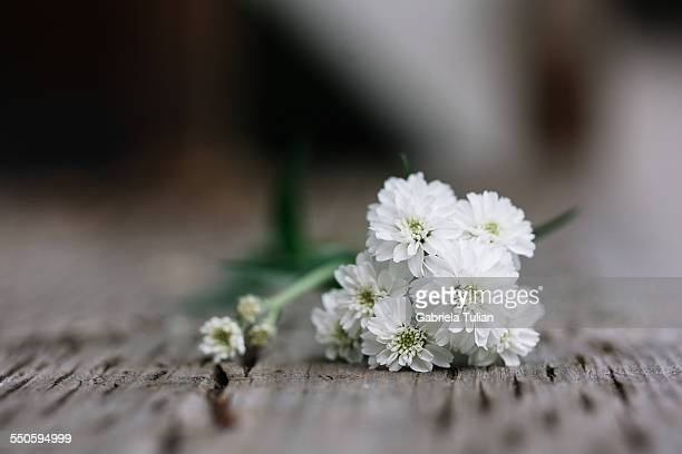 Bouquet of white flowers lying on a wood