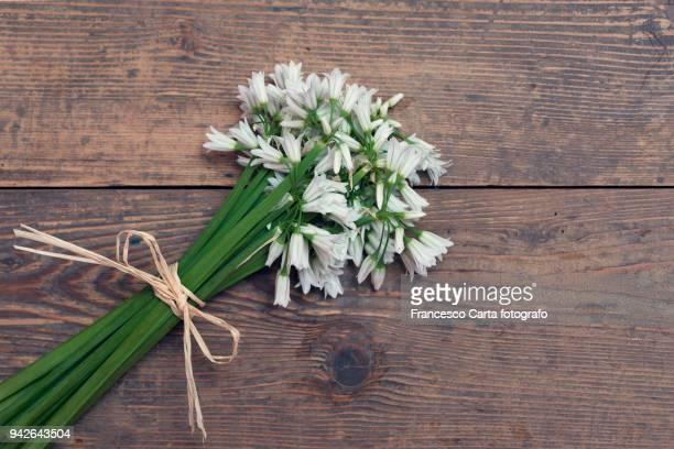 bouquet of wild garlic - mazzi fiori di campo foto e immagini stock