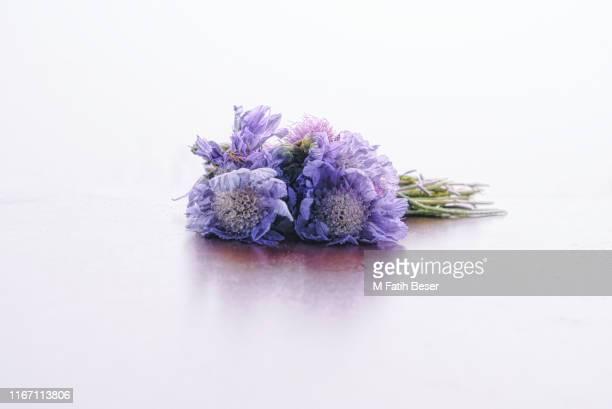 a bouquet of wild mountain flowers in a foggy day o white background. - mazzi fiori di campo foto e immagini stock