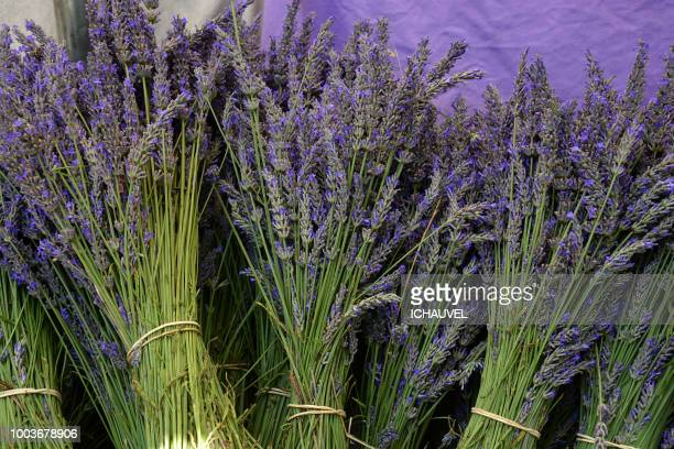 bouquets of lavender france - plateau de valensole stock photos and pictures