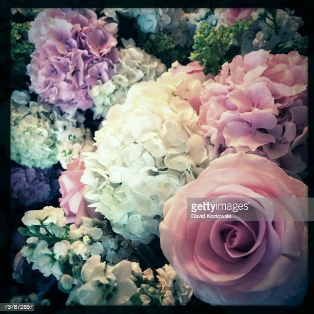 bouquets  - david ramos fotografías e imágenes de stock
