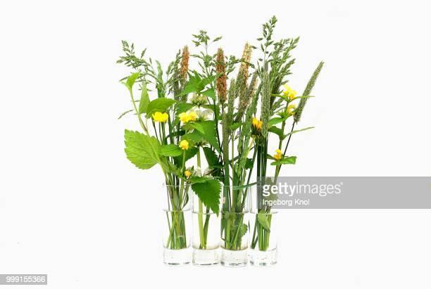 bouquets with grasses, in water glasses, germany - filo d'erba foto e immagini stock