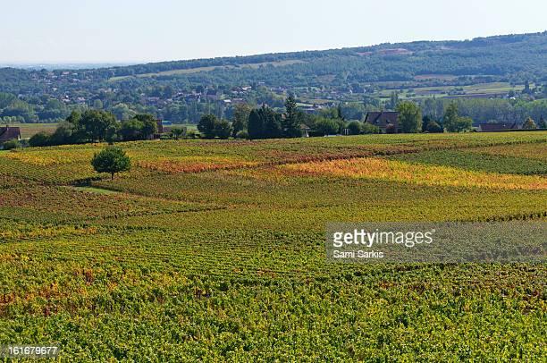 Bourgogne vineyards in autumn