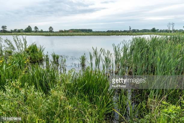 Bourgoyen-Ossemeersen Nature Reserve extensive swathe of marshy grassland is a nature reserve to migrating birds. In Ghent, Belgium on 22 May 2020....