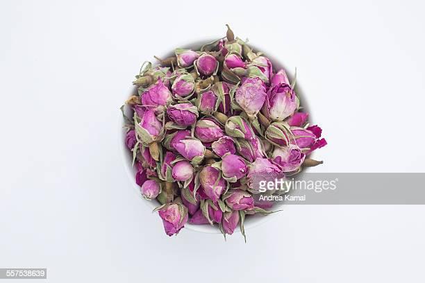 Boutons de Rose / Rose buds