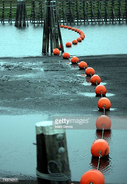 Bouys that were once floating on the surface lie on the bottom of Lake Okeechobee June 1 2007 in Okeechobee Florida Lake Okeechobee tied a record an...