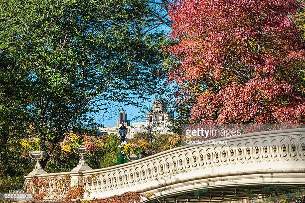 bow bridge in autumn in central park - cipriani manhattan stock pictures, royalty-free photos & images