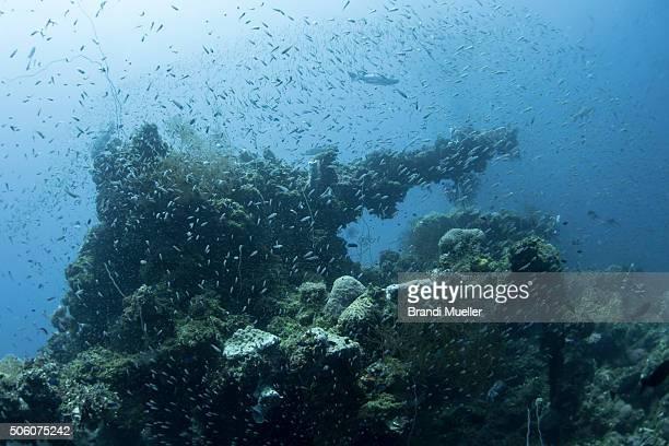 bow gun on the fujikawa maru - lagon chuuk photos et images de collection