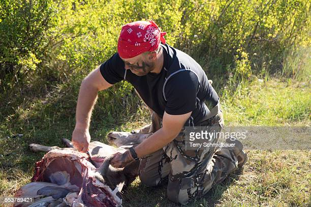 Bow Hunter Skinning Deer