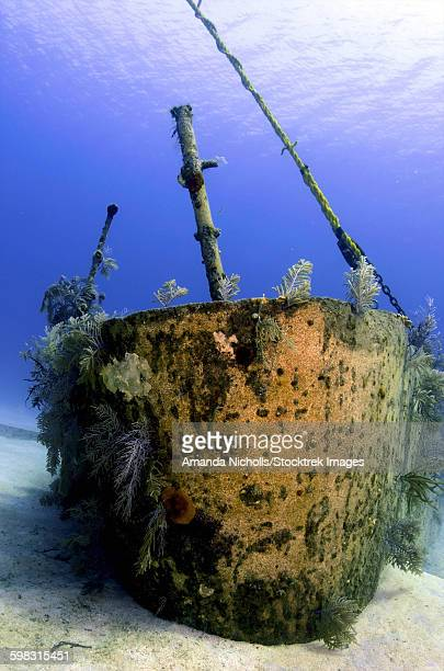 Bow of the Oro Verde Wreck, Grand Cayman.
