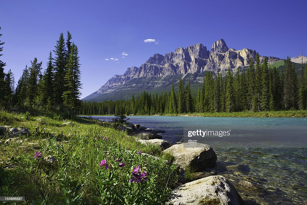 Bow River, Castle Mountain, Banff National Park Canada, wildflowers, copyspace : Stock Photo