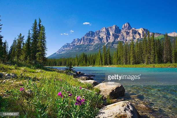 Bow River, Castle Mountain, Banff National Park Canada, wildflowers, copyspace