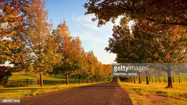 bowenfels,australia - boulevard stock pictures, royalty-free photos & images