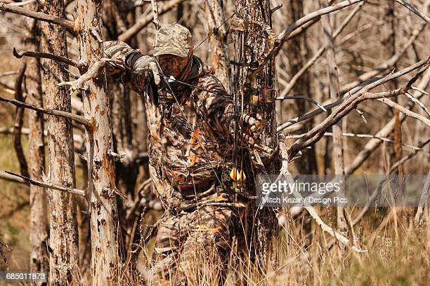 bowhunter aiming while hunting turkey - turkey hunting stock photos and pictures