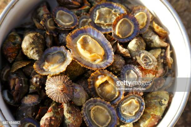 A bowl full of fresh limpets just picked up on the rocks Island of Pantelleria August 2015