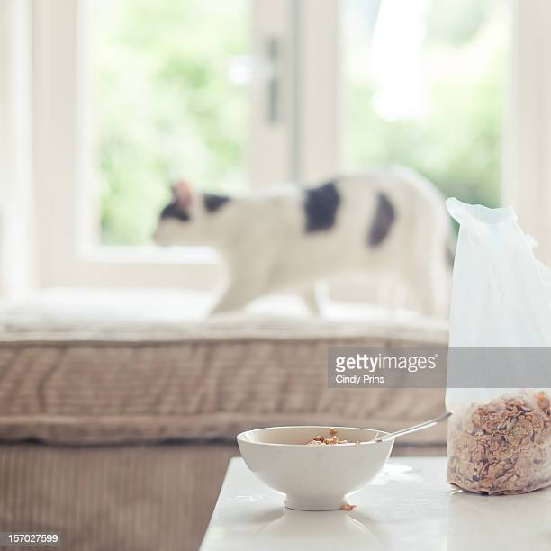 A bowl of cereal and a white cat on the couch